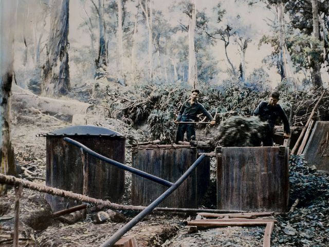 Hand-coloured photographic transparency, one of eight depicting various aspects of research and industry related to Eucalyptus oil distillation in Australia, circa 1880–1960, Powerhouse Collection.