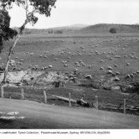 Ringbarking and erosion