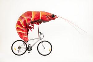 Sydney 2000 Olympic Games, prawn bike