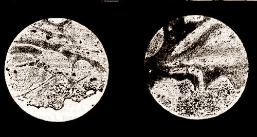 Drawings of Mars by Walter Gale on 25 August 1892