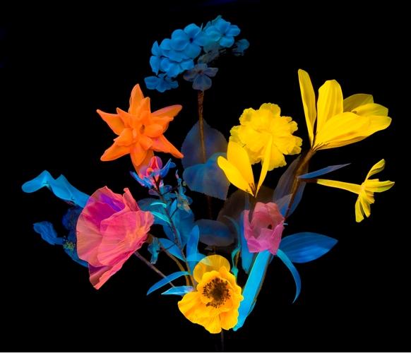 Fluorescent plastic 'Rhodoid' flowers