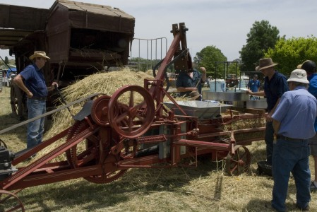 Wheat thresher in action