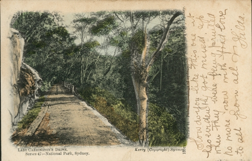 Postcard, Lady Carrington Drive, National Park, photo mechanical print, published by Kerry and Co., Sydney, New South Wales, Australia, 1906