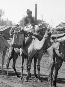 Afghan camel train 1900