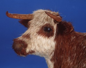 Detail of model wax cow