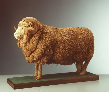A taxidermied stud ram, with a full coat of wool and two curled horns mounted on a wooden platform.