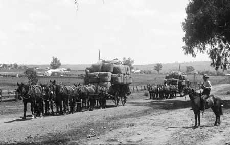 Black and white photograph of two wagons on a dirt road, each drawn by seven horses and loaded with wool bales. They are supervised by a man mounted on a horse to the right who carries a whip. In the background several homesteads can be seen.