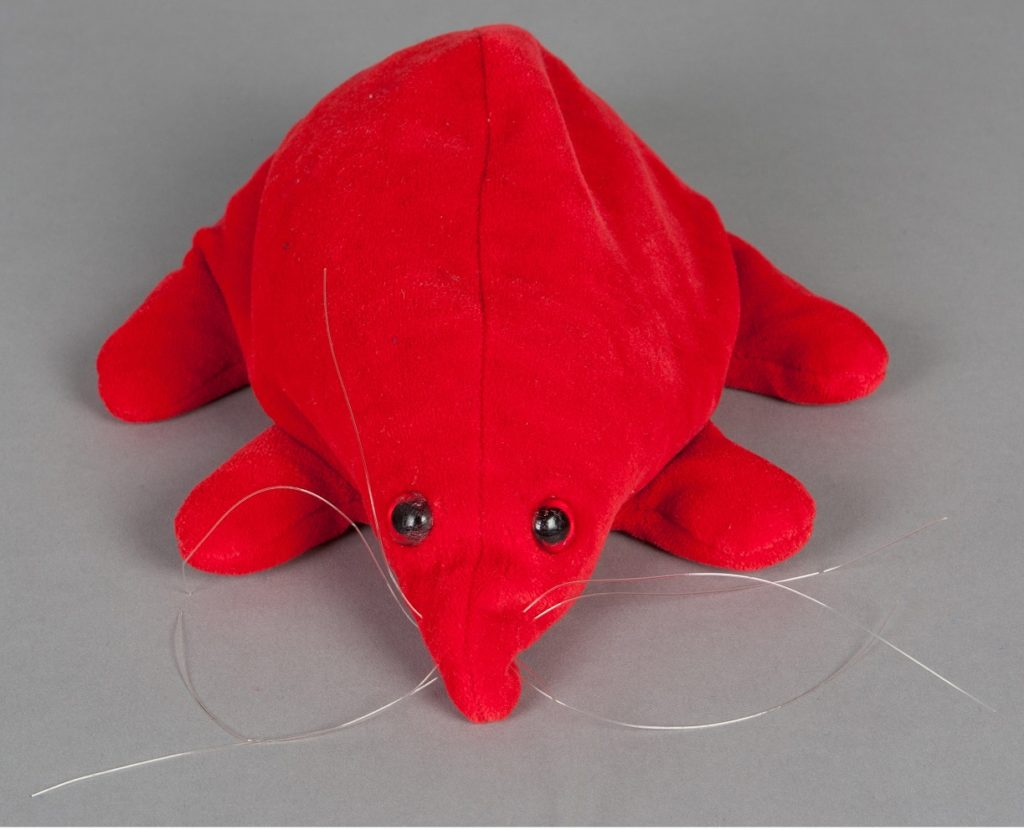 The Puggle is covered in soft, red cloth. Two plastic buttons represent the eyes, and plastic whiskers are sewn into the snout. The Puggle is filled with small synthetic beans to give it shape. The sleeping bag is made from soft, blue fabric. It has a hole cut into one side, reinforced with a metal ring. When placed in the sleeping bag, the Puggle's snout can be pulled through the hole. A red cloth tie is present - it has been removed from the top hemming of the sleeping bag.
