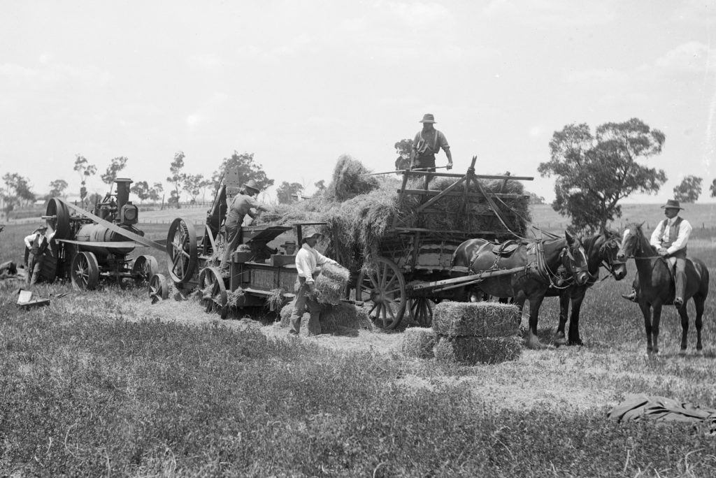 Black and white photograph of posed workers in a paddock working around machinery. The boss or overseer is mounted on a horse, an engine driver tends the steam portable engine while labourers fill the baler with hay and remove the bales.