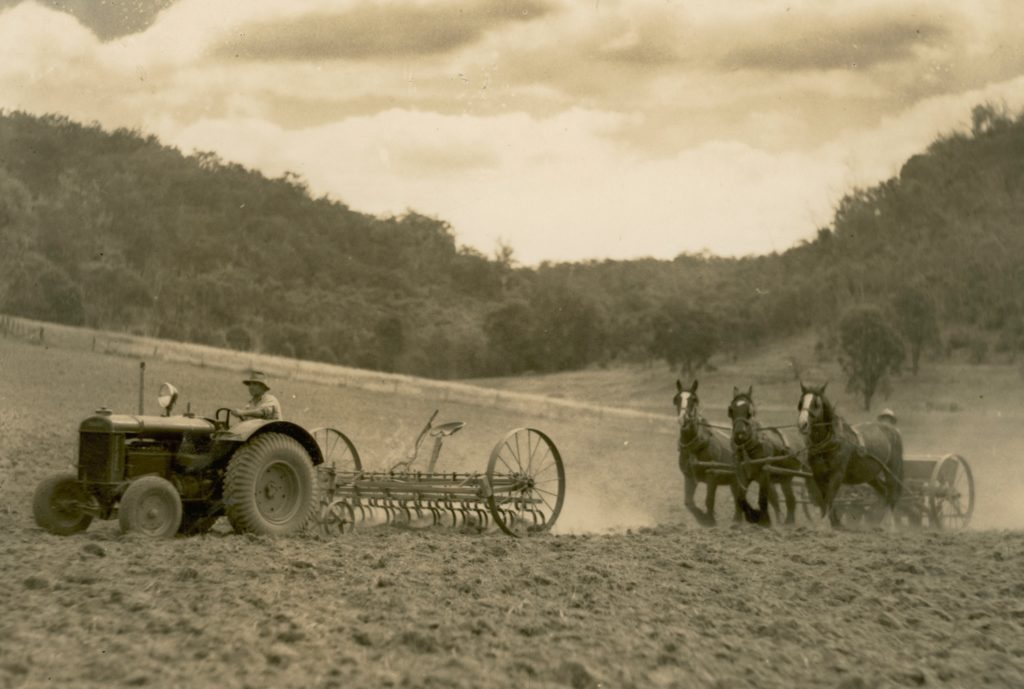 Black and white photograph showing a paddock being worked with a man driving a tractor pulling a cultivating implement being following by three horses pulling a seed-drill.