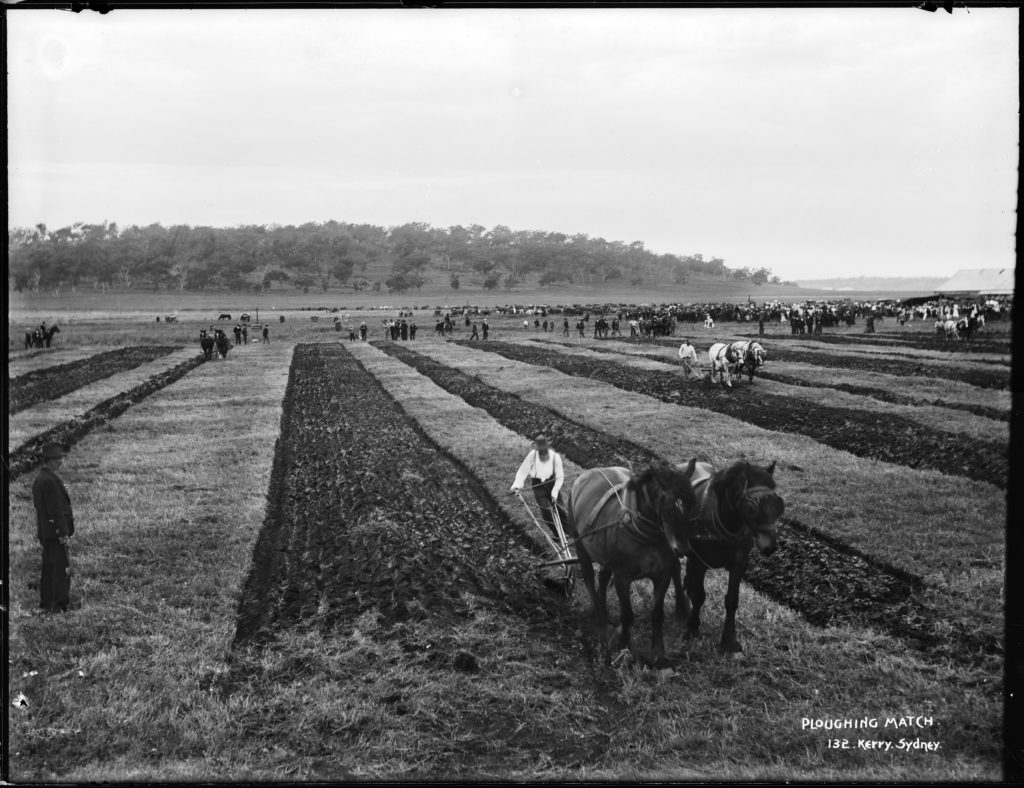 Black and white photograph showing rows of farmers ploughing sections of land in a field. Each plough is drawn by two horses. In the background there are crowds of people and horse-drawn vehicles are parked nearby